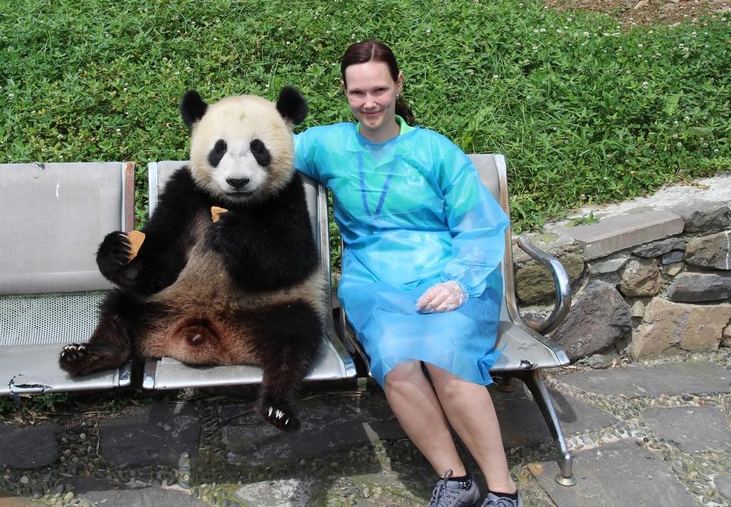 150715 Chengdu klappe panda 1