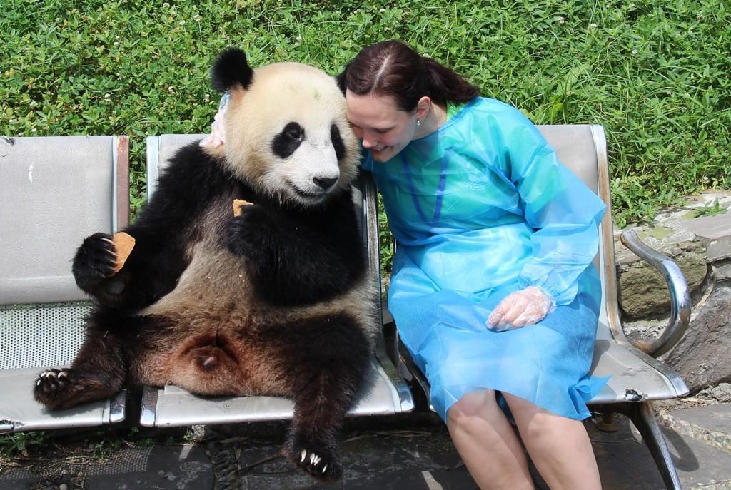 150715 Chengdu klappe panda 2